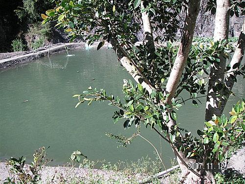 鐵皮屋邊的魚池